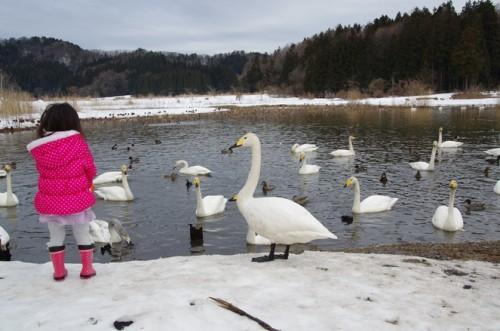 女の子と白鳥